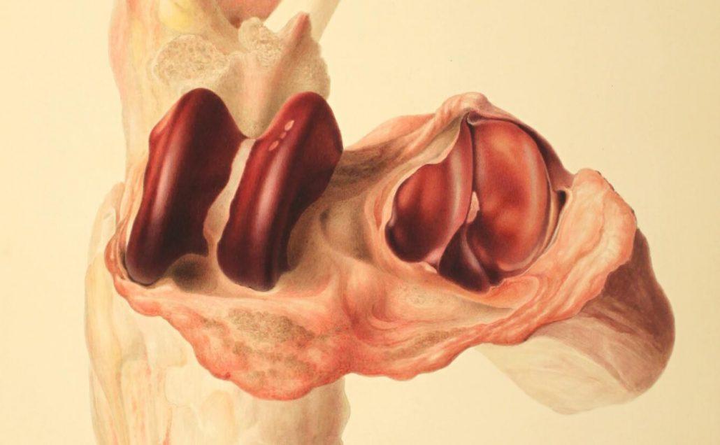 Anatomical Artwork Scans